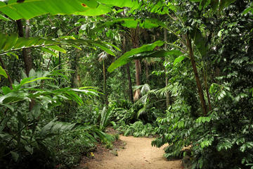 Cairns Sightseeing Tour Including Botanical Gardens, Mt Whitfield and the Dome