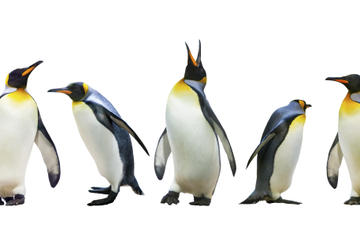 Encontro com pinguins no Ski Dubai