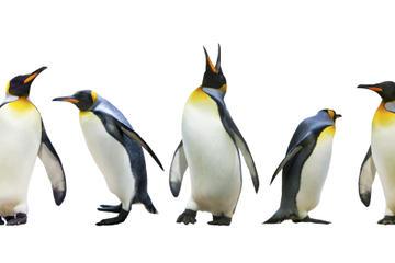 Rencontre avec les pingouins à Ski Dubai