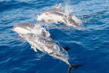 Port Stephens-Tagestour, Geländewagen, Sandboarding, Delfinbeobachtung