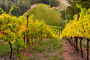 Private Adelaide Wine Region Tour