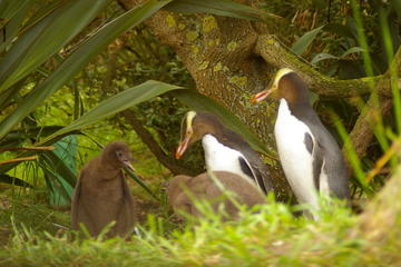 Dunedin Shore Excursion: Dunedin and Otago Peninsula Wildlife Tour...