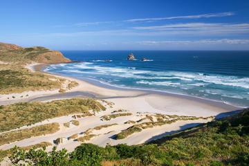 Dunedin-walexcursie: Tour met kleine groep langs Dunedin en het ...