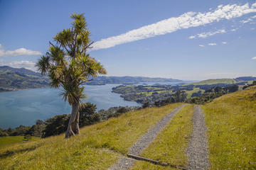 Small-Group Tour of Dunedin City