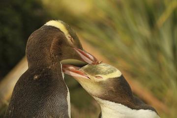 Visite de la faune et de la flore de Dunedin et de la péninsule...