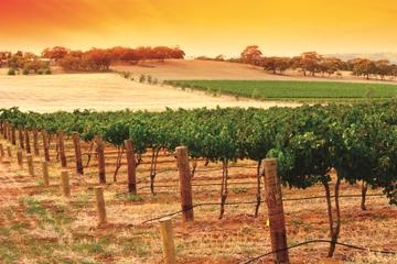 Ausflug nach Barossa Valley und Hahndorf ab Adelaide