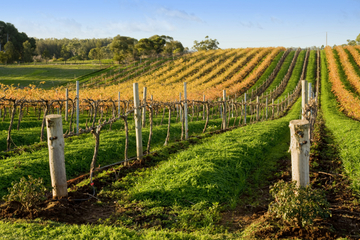 Excursão pela região vinícola de Victor Harbor com McLaren Vale...