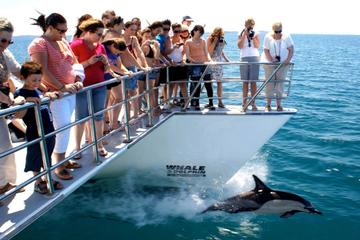 Crucero de avistamiento de delfines y ballenas en Auckland