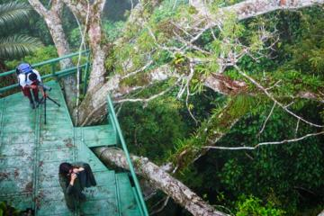Amazon wildlife and cultural experience