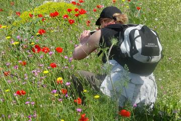 Full Day Botanical Tour In Mani, Peloponnese