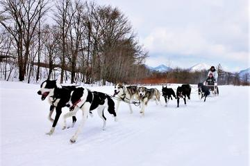 Dog Sledding Day Tour with Special Picnic Lunch: Small Group Tour