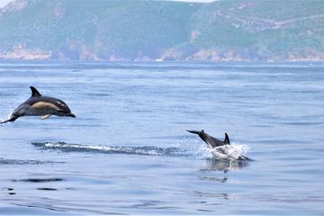 Bartholomew Diaz Expedition - Dolphin...