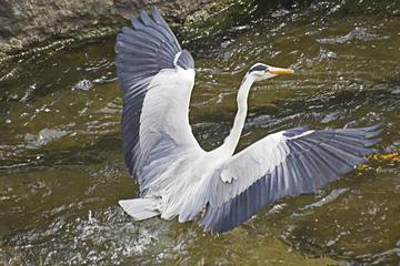 注南湿地公園と海印寺プライベート ツアー