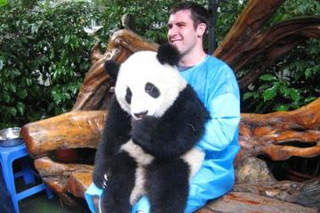 Private 2 Day Chengdu Tour: Panda Base And Giant Buddha