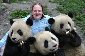 Private Day Tour: Chengdu Panda Base