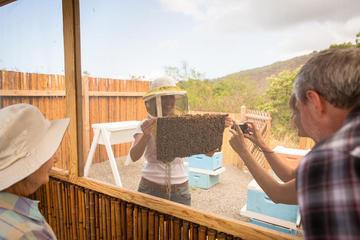 コナ ツアー:コーヒー農園、ケアラケクア湾、カ…
