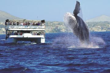 Croisière d'observation des baleines de Los Cabos avec petit-déjeuner