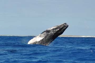 Private Whale-Watching Tour from Grand Turk