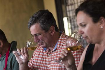 Wine tasting and cellar tour in the heart of Sardinia