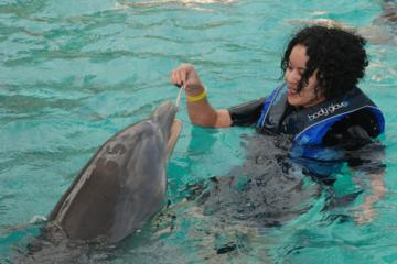 Blue Lagoon Island Dolphin Swim from Nassau