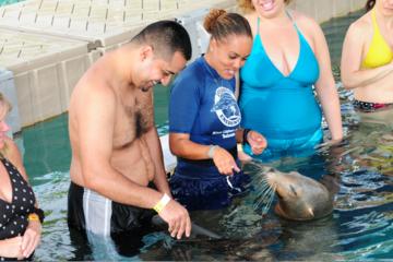 Rencontre avec les otaries à Blue Lagoon au départ de Nassau