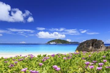 Croisière-plongée en hors-bord d'une journée aux Îles Similan au...