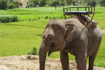 Das ländliche Thailand – Ausflug von Phuket einschließlich Elefanten...