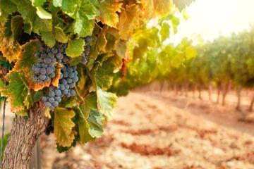 Chianti Classico Winery Tour