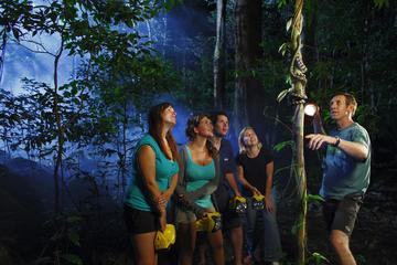 Daintree Rainforest Night Walk from Cape Tribulation