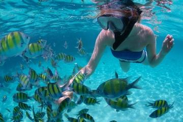 Croisière-plongée au départ de Montego Bay