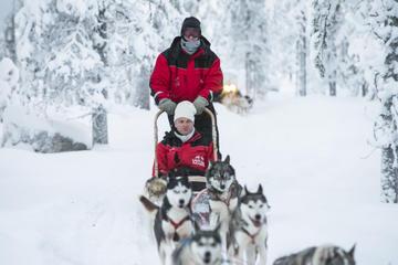 Lapland Fahrt im Huskyschlitten ab...