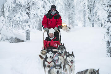 Lapland Husky Sled Ride from...
