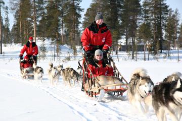Noël en traîneau avec chiens husky en...