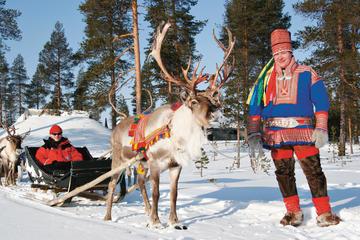 Rentier-Safari ab Rovaniemi in...