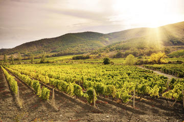 Cyprus Wine Tasting, Villages and Ancient Sites Day Trip from Ayia...