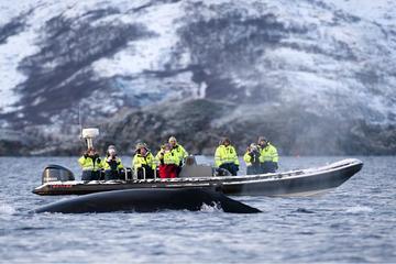 Croisière d'observation des baleines en canot au départ de Tromso