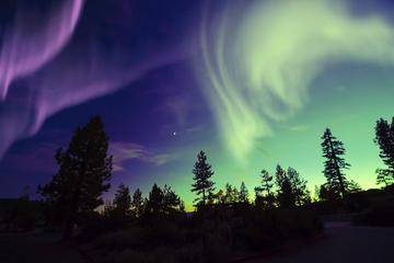 Excursion en petit groupe Les lumières du Nord au départ de Tromso y...