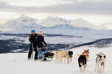 Safari em Lapônia com trenó puxado por Husky saindo de Tromso