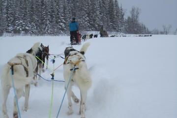 Safari en traîneau tiré par des huskies en Laponie, au départ de...