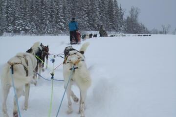 Sleesafari met husky's vanuit Tromsø