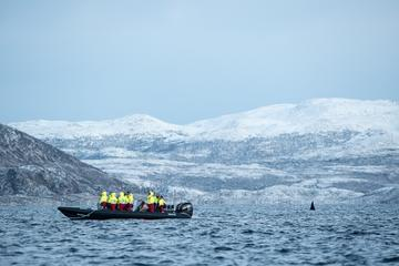 Tromso Whale Safari by RIB