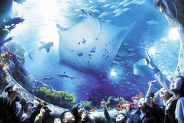 Evite as Filas: Entrada para o Ocean Park de Hong Kong