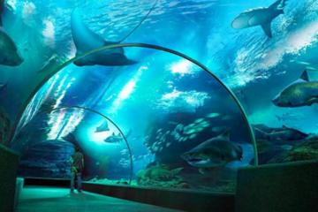 SEA LIFE Bangkok Ocean World Admission
