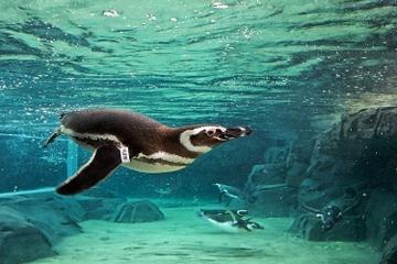 Entrée générale à l'Aquarium du Pacifique