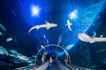 ベイ水族館への一般入場