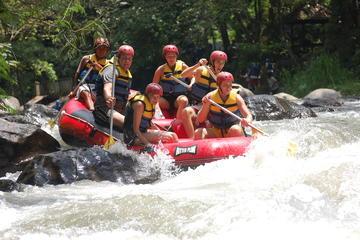 Ayung Rafting and Kintamani Tour