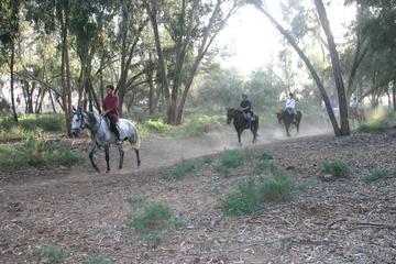 Horse riding in Agadir