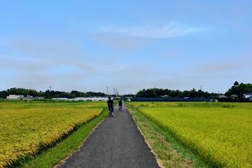 Rural Japan cycling tour to village forest in Ichinomiya