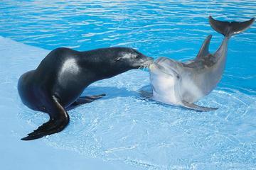 Aquarium Mar del Plata Admission Ticket
