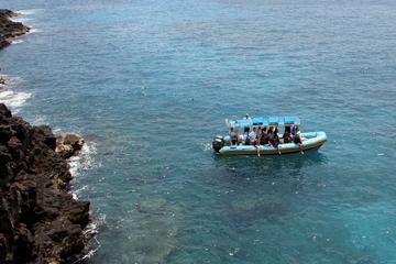 ハワイ コンボ:ケアラケクア湾でイルカと泳ぐシ…